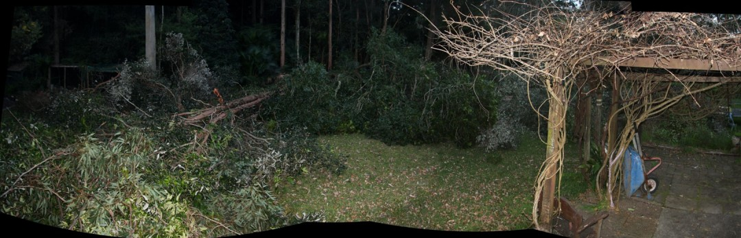 Backyard after chainsaw pruning 29th July 2012