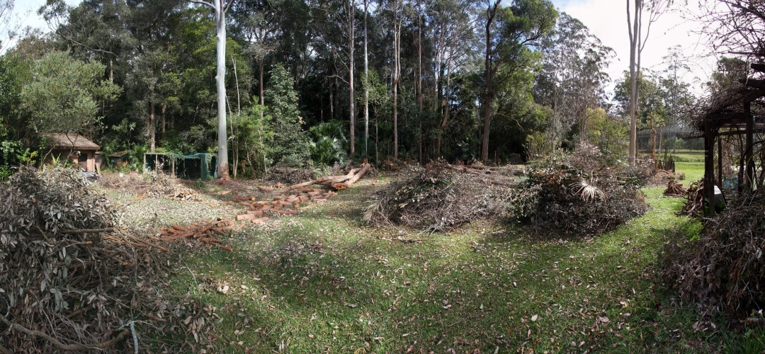 Backyard after chainsaw pruning 26th August 2012 from ground