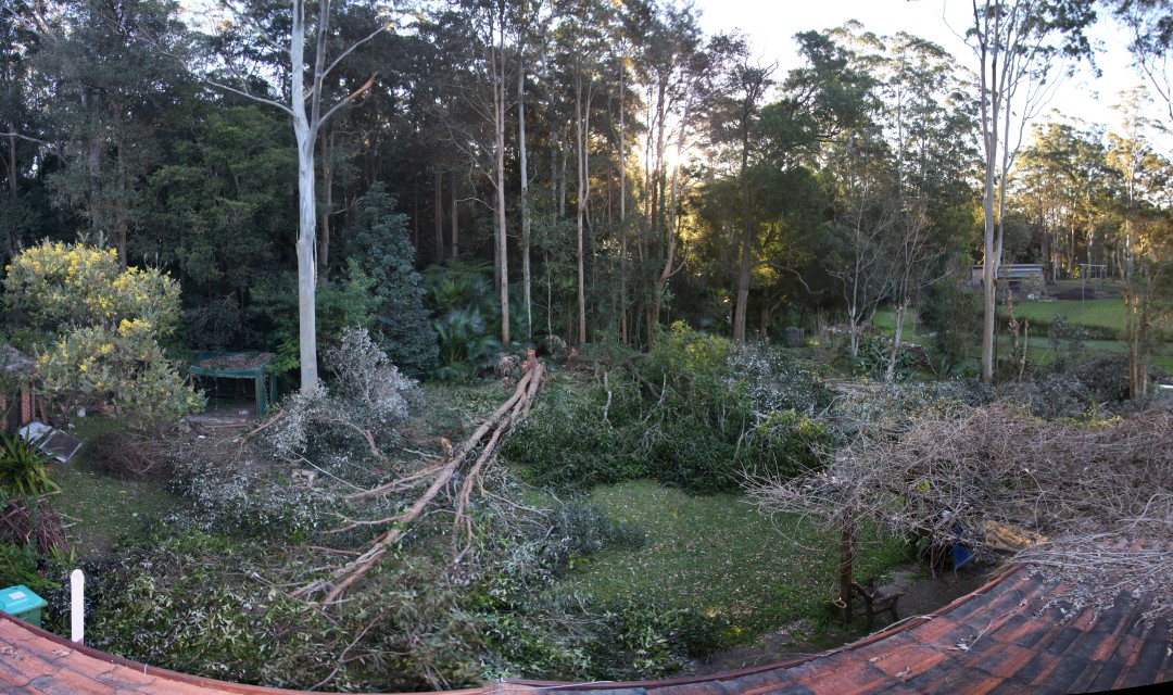 Backyard after chainsaw pruning 29th July 2012 from rooftop