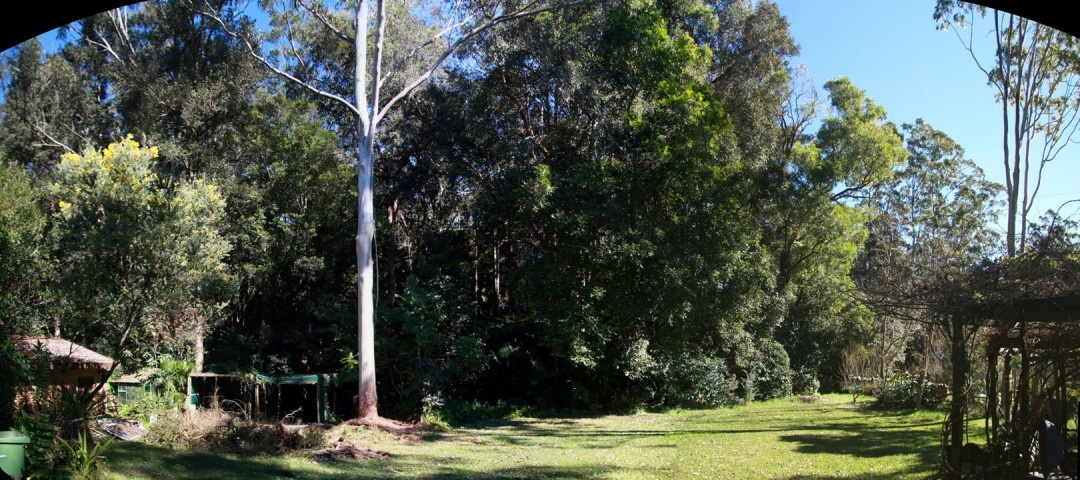Backyard before chainsaw pruning 29th July 2012